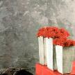 Декоративная штукатурка Шпатула Стуххи 01 от фабрики Hageri.