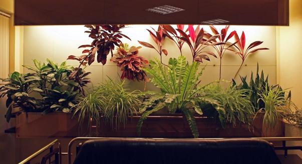 комнатные растения дающие аллергию фото растений