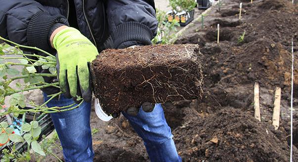 Выращивание саженцев с закрытой корневой системой 84