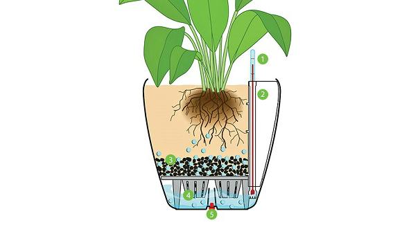 план ухода за комнатными растениями полив картинки
