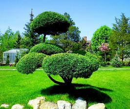 Японский сад: подготовительные работы и принципы планировки