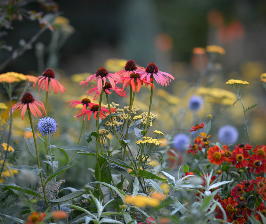 Самые модные садовые растения назовут на конференции «Цветочного джема»