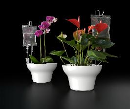 Цветы под капельницей