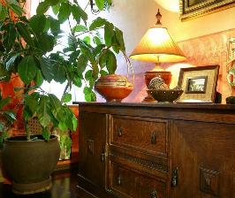 7 вопросов о неприхотливых комнатных растениях