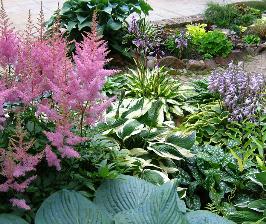Декоративнолистные растения в дизайне сада