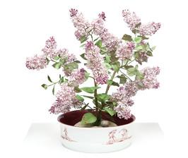 Фарфоровый сад на столе