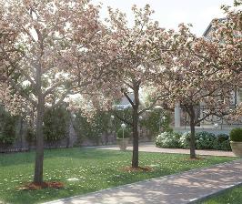 Да будет сад! 8 вопросов про деревья-крупномеры