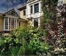 Знакомьтесь: декоративно-лиственные кустарники