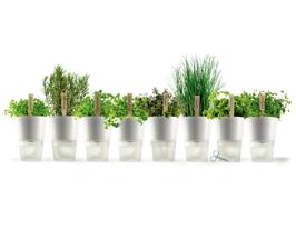 Сад на подоконнике: тенденции и инновации