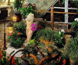 4 популярные разновидности растений для дома: выбираем, пересаживаем, ухаживаем