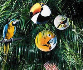 Vista Alegre разводит попугаев на тарелках