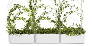 Фитодизайн сегодня: выбираем идеальные цветы для дома и офиса