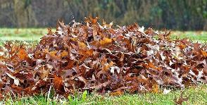 Сбор листвы: почему это важно