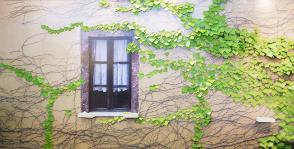 Комнатное «озеленение»