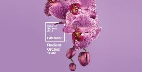 Лучистая орхидея
