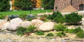 Создание рокария с хвойными растениями