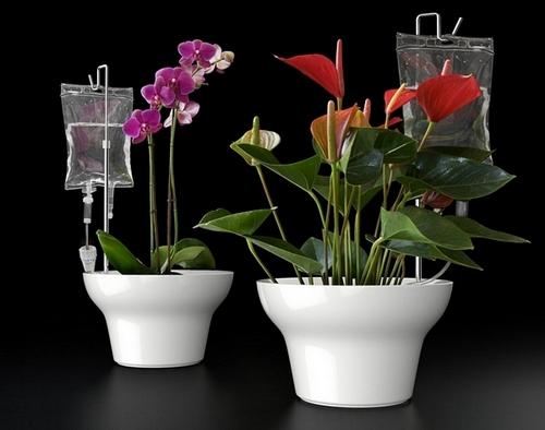 Как сделать самополив комнатных цветов